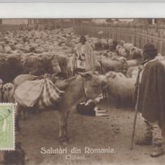 ROMANIA - SALUTARI DIN ROMANIA, CIOBANI - LOT 2 CP - Carte Postala Muntenia dupa 1918, Circulata