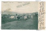 3339 - CAMPULUNG, Bucovina, cattle Market - old postcard - used - 1909