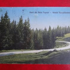 Vedere - Constanta - Partii din Baile Tusnad - Carte Postala Banat dupa 1918, Necirculata, Fotografie