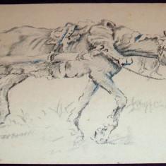 Martoaga - Pastel anii 60, grafica ecvestra ilustratie de carte - Tablou autor neidentificat, An: 1960, Animale, Impresionism
