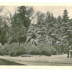 3034 - TIMISOARA, High School Park - old postcard - unused - Carte Postala Banat 1904-1918, Necirculata, Printata