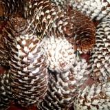 Plante naturale uscate - conuri de molid inzapezite 10-12 cm, pret punga