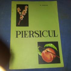 PIERSICUL  C IONITA