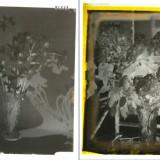 Clisee Foto pe Sticla Agfa - 12 bucati, anul 1920,  Colectie., Natura, Romania 1900 - 1950