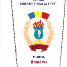 Fanion Consiliul Judetean Educatie Fizica si Sport PRAHOVA