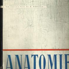 Anatomie Angiologia, glandele endocrine, sistemul nervos si organele de simt