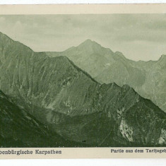 2965 - SIBIU, Fagaras Mountain, Varful Tarita - old postcard - unused - 1917 - Carte Postala Transilvania 1904-1918, Necirculata, Printata