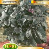 Seminte de busuioc rosu