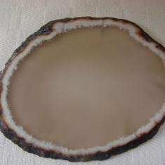 Varietate de agat feliat si slefuit - Fosila roca, Felie, Agata