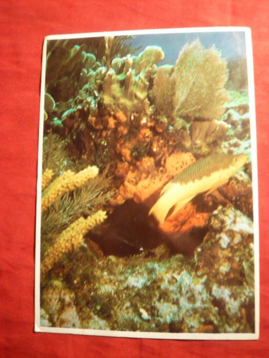 Ilustrata Fauna Marina - San Salvador , circ.cu 15 C Bahamas