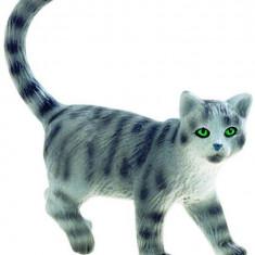 Pisica Vargata