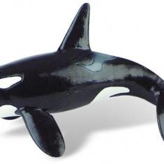 Balena Ucigasa (Orca)