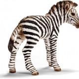 Figurina Animal Pui De Zebra - 14393 - Figurina Animale Schleich
