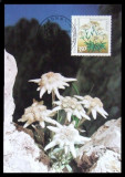 GERMANIA  - FLOARE DE COLT, 1 ILUSTRATA MAXIMA OBLITERATA - IM 0386