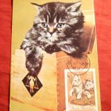Maxima - Pisica in cutie -1965