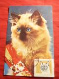 Maxima - Pisica -1979  Bulgaria