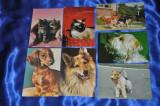 LOT 7 Vederi vechi ANIMALE (Pisici,Caini,Catei)