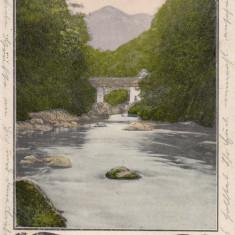 HERCULANE, PODUL PESTE CERNA, CIRCULATA SEP.''905 - Carte Postala Banat pana la 1904, Printata, Baile Herculane