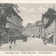 SIBIU, STRADA REGINA MARIA - Carte Postala Transilvania dupa 1918, Necirculata, Printata