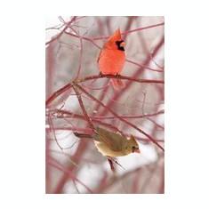 Cardinal Blank Journal - Carte in engleza