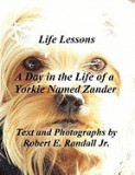 A Day in the Life of a Yorkie Named Zander