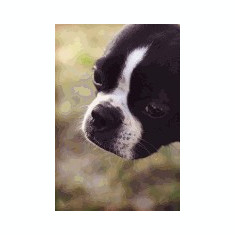 Boston Terrier (200 Page Lined Journal): Blank 200 Page Lined Journal for Your Thoughts, Ideas, and Inspiration - Carte in engleza