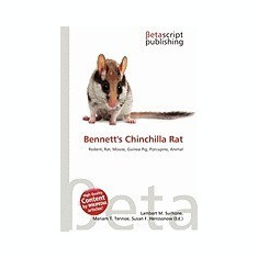 Bennett's Chinchilla Rat
