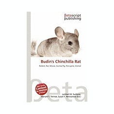 Budin's Chinchilla Rat
