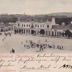 ALBA IULIA, KARLSBURG, PIATA, CLASICA, CIRCULATA 1903 - Carte Postala Transilvania pana la 1904, Printata