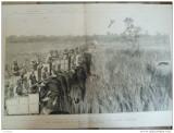Grafica 1876  The Graphic vanatoare leopard print Wales Terai India elefant