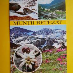 HOPCT 17271 MUNTII RETEZAT/FLOARE DE COLT -JUD CARAS SEVERIN-NECIRCULATA - Carte Postala Banat dupa 1918, Printata