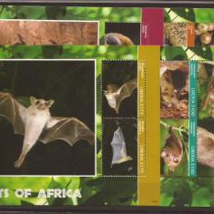 Liberia - bats of Africa - 2014