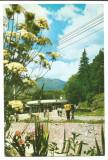 @carte postala(ilustrata)-BISTRITA NASAUD-Saigeorz Bai-Izvoarele de apa minerala, Necirculata, Printata