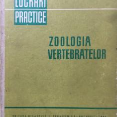 ZOOLOGIA VERTEBRATELOR - LUCRARI PRACTICE - Teodoreanu, Matic