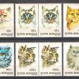 Rase de pisici, 1993, perechi, nr. lista 1315, MNH - Timbre Romania, Nestampilat