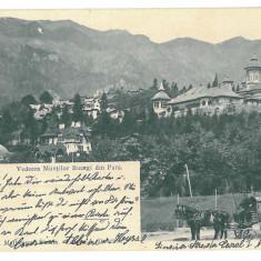 2520 - Prahova, SINAIA, salesman - old postcard - used - 1904 - Carte Postala Muntenia pana la 1904, Circulata, Printata