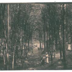 3183 - PITESTI, Park Trivale - old postcard, CENSOR - used - 1918 - Carte Postala Muntenia 1904-1918, Circulata, Printata