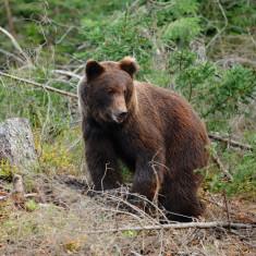 Pachet Gard electric împotriva urșilor 1000m cu Garanție 2 ani