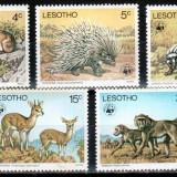 Lesotho 1977 WWF TOP SET, Mi #228-232**, animale, MNH, cota 80 €! - Timbre straine, Natura, Nestampilat