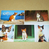Pisici - animale - Grecia - 2+1 gratis - RBK17267 - Carte postala tematica, Necirculata, Fotografie