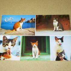 Pisici - animale - Grecia - 2+1 gratis - RBK17267
