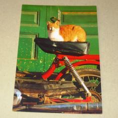 Pisica - animale - bicicleta electrica Grecia - 2+1 gratis - RBK17269