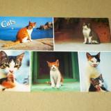 Pisici - animale - Grecia - 2+1 gratis - RBK17290 - Carte postala tematica, Necirculata, Fotografie