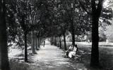 Sălişte, Parcul, ilustrată veche