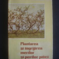 BERCZI ANDREI - PLANTAREA SI INGRIJIREA MERILOR SI PERILOR PITICI - Carti Agronomie