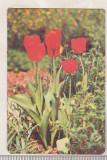 bnk cld Calendar de buzunar 1982 - Loto Pronosport - flori