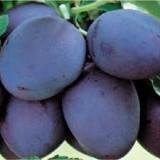 Palinca naturala de prune, 52 grade, la numai 30 lei L