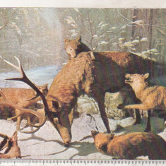 Bnk cp Muzeul Antipa - Diorama - necirculata