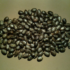 Ricin (ricinus comunis) (20 seminte)