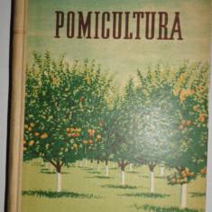 POMICULTURA 462PAGINI/AN 1953= BELOHONOV - Carti Agronomie